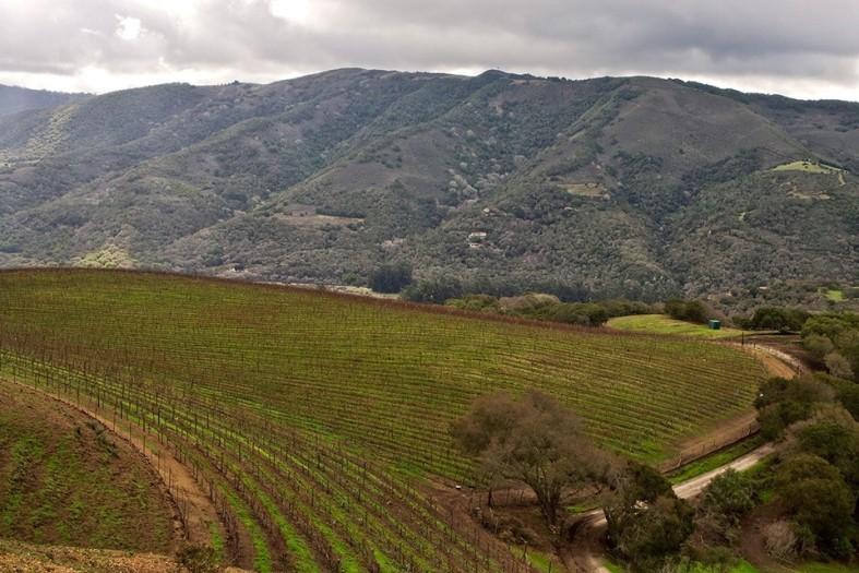 Tabott-Vineyards